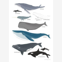 -Whales poster 54 illustration-21