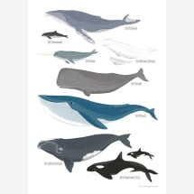 -Whales poster with wooden strip 54 illustration-21