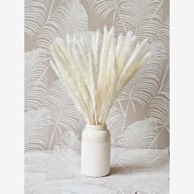 -Dried flowers pampas grass soft white 5 fronds-21