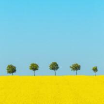 -Spring by Holger Nimtz-21
