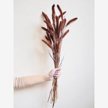 -Setaria brown bunch of dried flowers-21