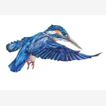 -Kingfisher signed gesso print-21