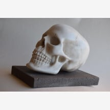 -Human Skull White Carrara marble-21
