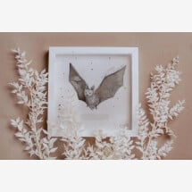 """-Picture frame with watercolor print """"PUMPIS POWER ANIMAL BAT""""-21"""