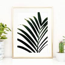 -Tales by Jen Art Print: Palm Leaf-21