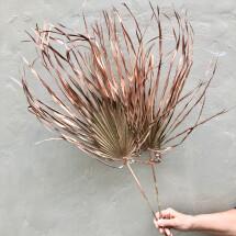 -Chamaerops Dried Palm Leaves Palm Leaf Palm BranchDried Flowers DIY Deco Boho dried flower bouquet-26