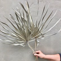 -Chamaerops dried flowers pam leaf palm fronds DIY dried flower bouquet DIY boho palm branch-23