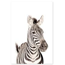 -Groovy Magnets Zebra Magnetic Poster-21