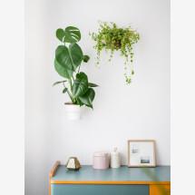 -PLANTY RINGS wall bracket for plants 2-21