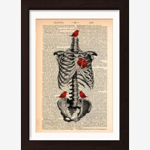-Rib Cage with Red Birds print on 1890 French dictionary page-21