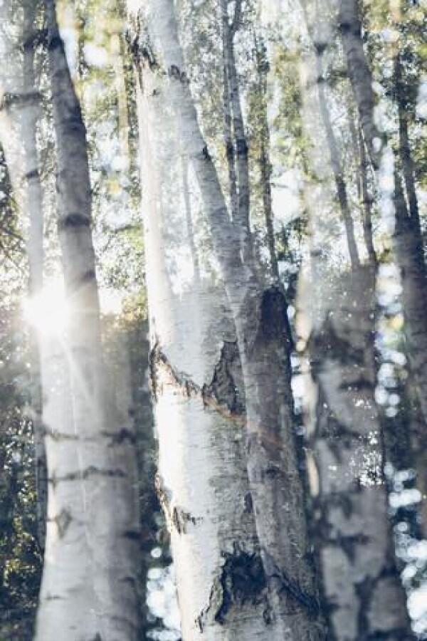 Birch trees in the sunlight of Nadja jacket | Photocircle