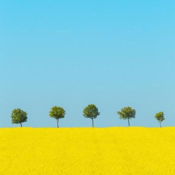 Spring by Holger Nimtz | Photocircle