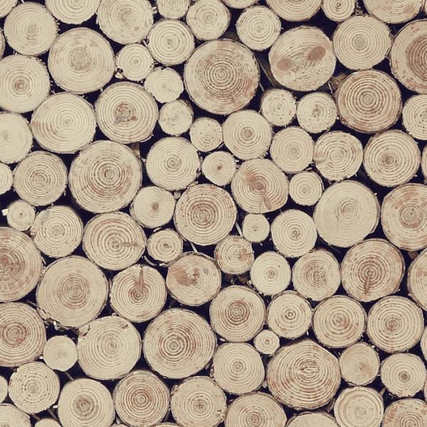 Branch slices with bark | Die Werkkiste