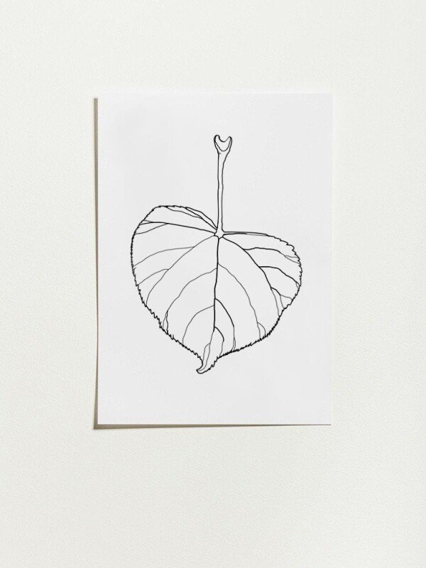 Poster with linden tree design - leaf | Lipa store