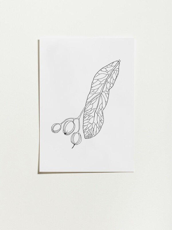 Poster with linden tree design - fruit | Lipa store